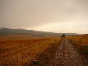 camino hierba